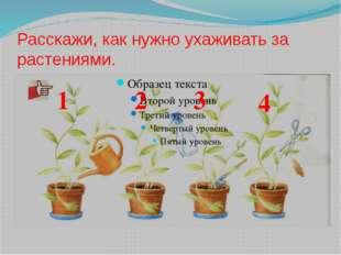 Расскажи, как нужно ухаживать за растениями. 1 2 3 4