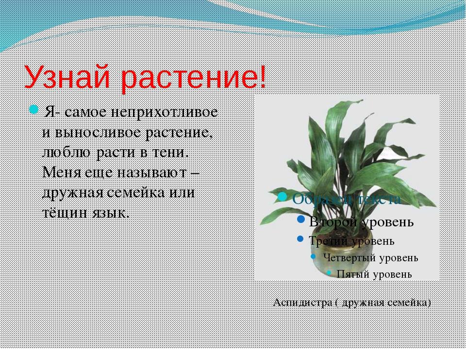 Узнай растение! Я- самое неприхотливое и выносливое растение, люблю расти в т...