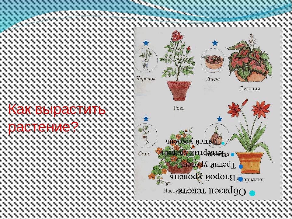 Как вырастить растение?
