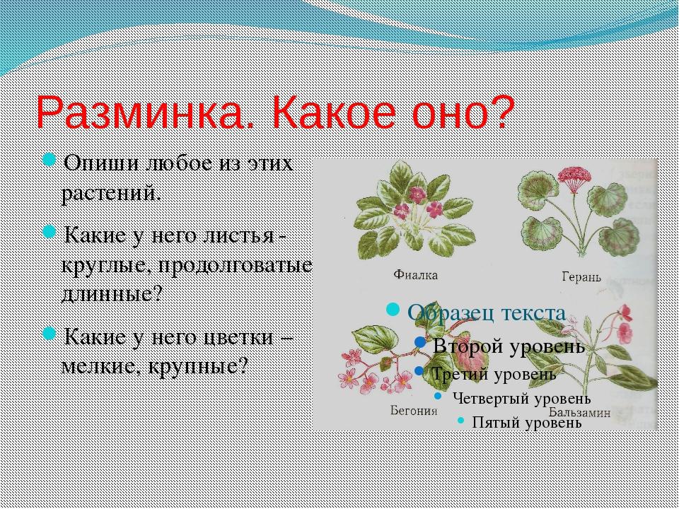 Разминка. Какое оно? Опиши любое из этих растений. Какие у него листья - круг...