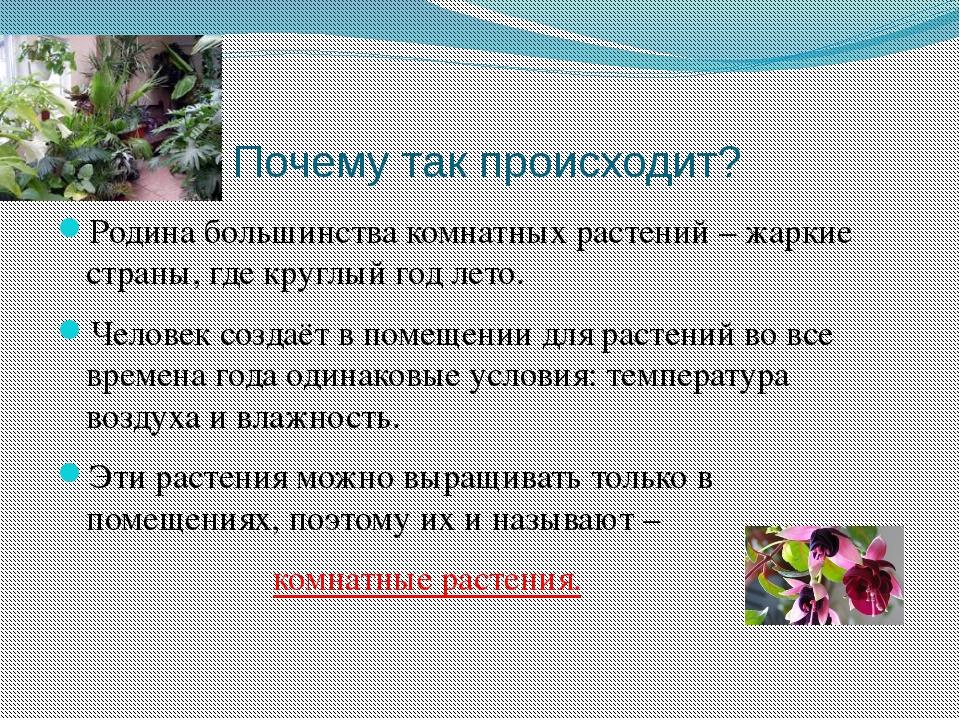 Почему так происходит? Родина большинства комнатных растений – жаркие страны...