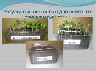 Результаты опыта всходов семян на тринадцатый день: