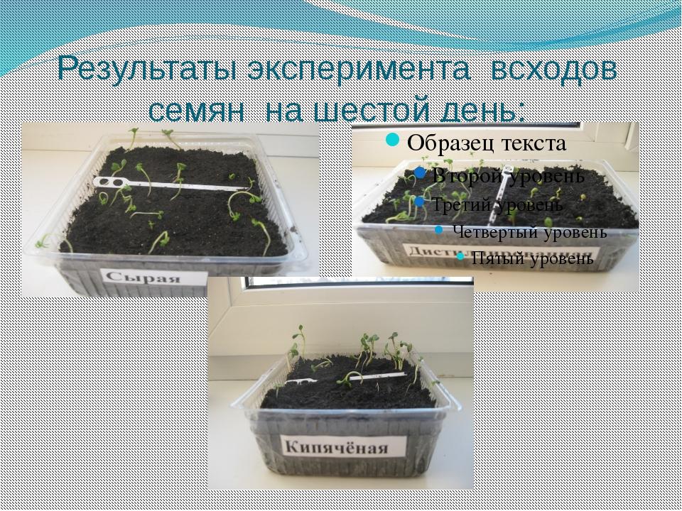 Результаты эксперимента всходов семян на шестой день: