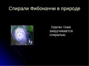 Спирали Фибоначчи в природе Ураган тоже закручивается спиралью.