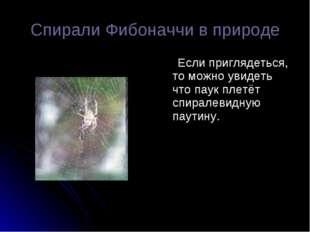 Спирали Фибоначчи в природе Если приглядеться, то можно увидеть что паук плет