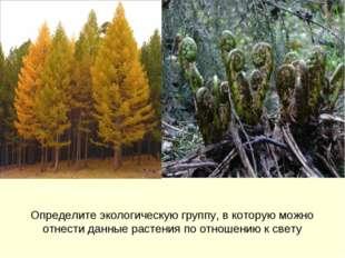Определите экологическую группу, в которую можно отнести данные растения по о