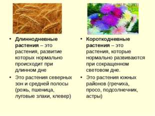 Длиннодневные растения – это растения, развитие которых нормально происходит