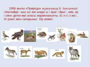 1956 жылы «Природа» журналында В. Залетаевтың «Каспийдің шығыс жағындағы қар