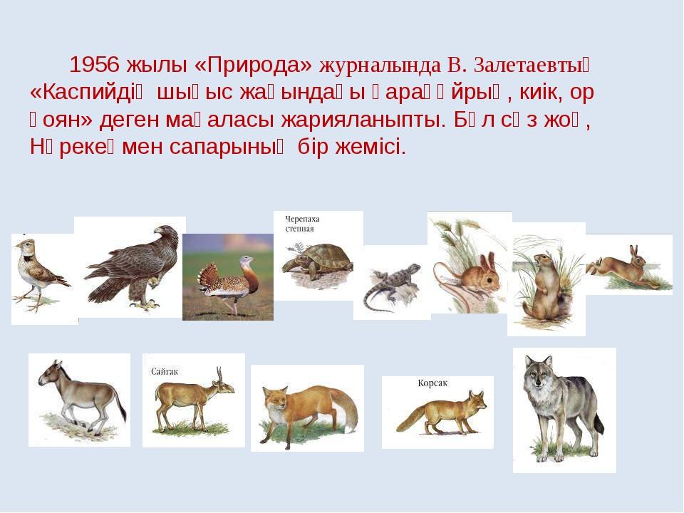 1956 жылы «Природа» журналында В. Залетаевтың «Каспийдің шығыс жағындағы қар...