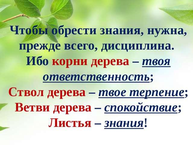 Чтобы обрести знания, нужна, прежде всего, дисциплина. Ибо корни дерева – тво...