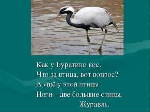 Как у Буратино нос. Что за птица, вот вопрос? А ещё у этой птицы Ноги – две