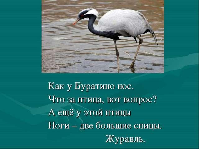 Как у Буратино нос. Что за птица, вот вопрос? А ещё у этой птицы Ноги – две...