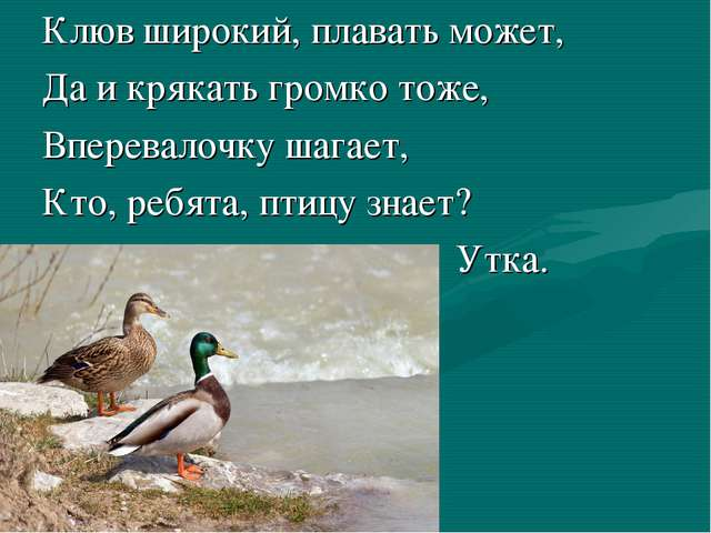 Клюв широкий, плавать может, Да и крякать громко тоже, Вперевалочку шагает,...