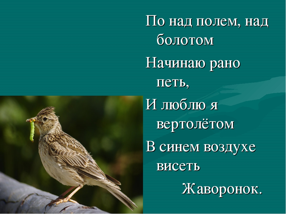 По над полем, над болотом Начинаю рано петь, И люблю я вертолётом В синем во...