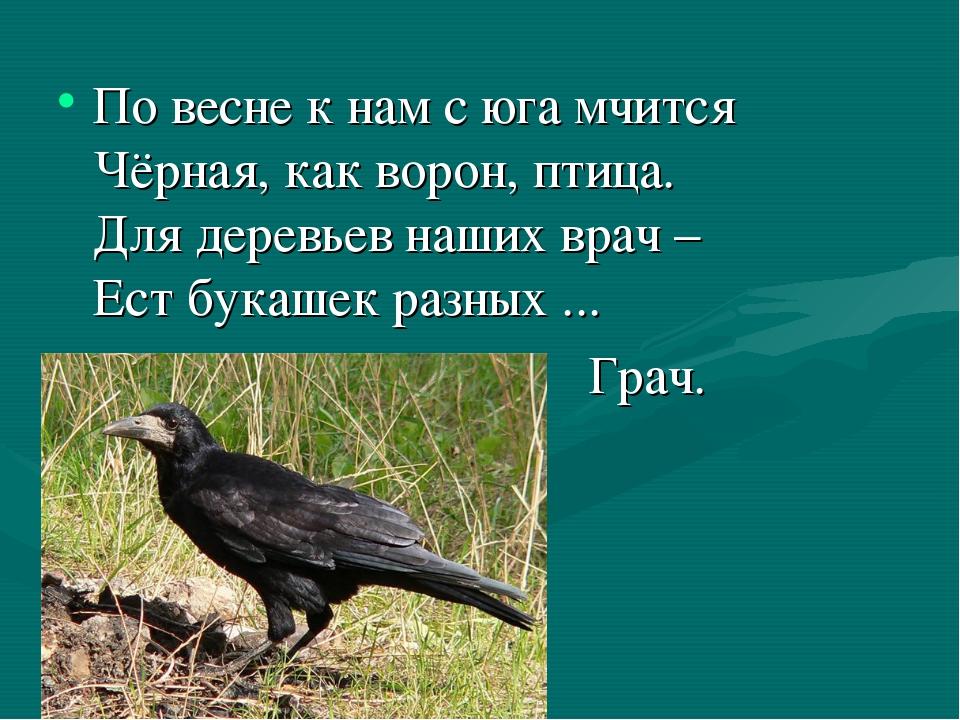 По весне к нам с юга мчится Чёрная, как ворон, птица. Для деревьев наших врач...