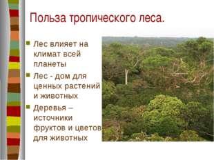 Польза тропического леса. Лес влияет на климат всей планеты Лес - дом для цен