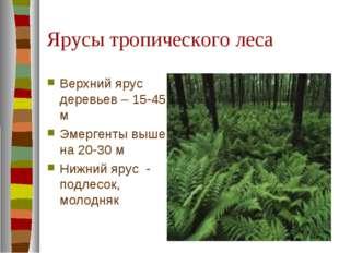 Ярусы тропического леса Верхний ярус деревьев – 15-45 м Эмергенты выше на 20-