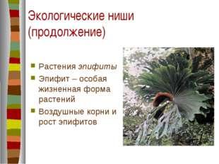 Экологические ниши (продолжение) Растения эпифиты Эпифит – особая жизненная ф