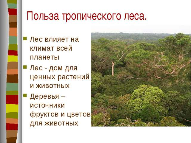 Польза тропического леса. Лес влияет на климат всей планеты Лес - дом для цен...