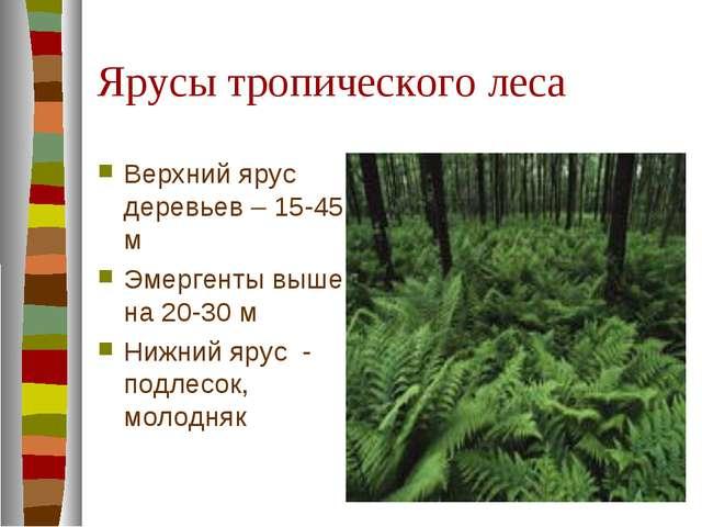Ярусы тропического леса Верхний ярус деревьев – 15-45 м Эмергенты выше на 20-...