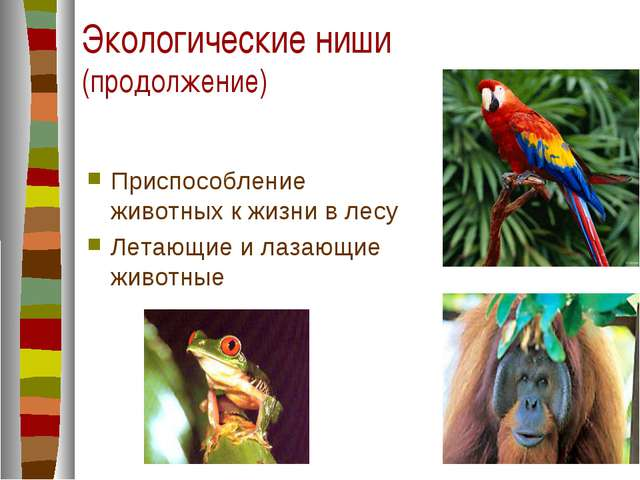 Экологические ниши (продолжение) Приспособление животных к жизни в лесу Летаю...