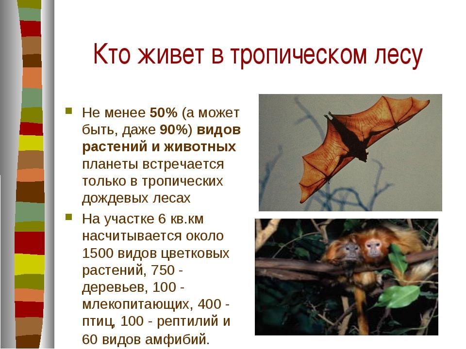 Кто живет в тропическом лесу Не менее 50% (а может быть, даже 90%) видов раст...