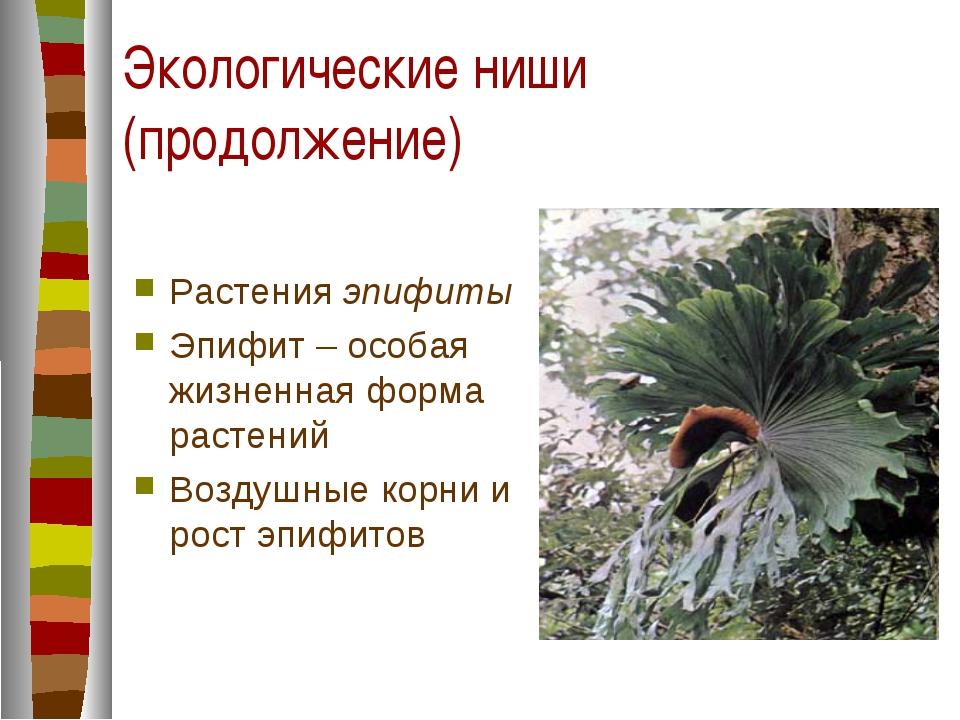 Экологические ниши (продолжение) Растения эпифиты Эпифит – особая жизненная ф...