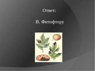 Ответ: В. Фитофтору