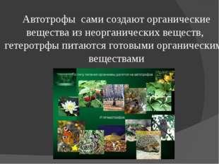 Автотрофы сами создают органические вещества из неорганических веществ, гетер