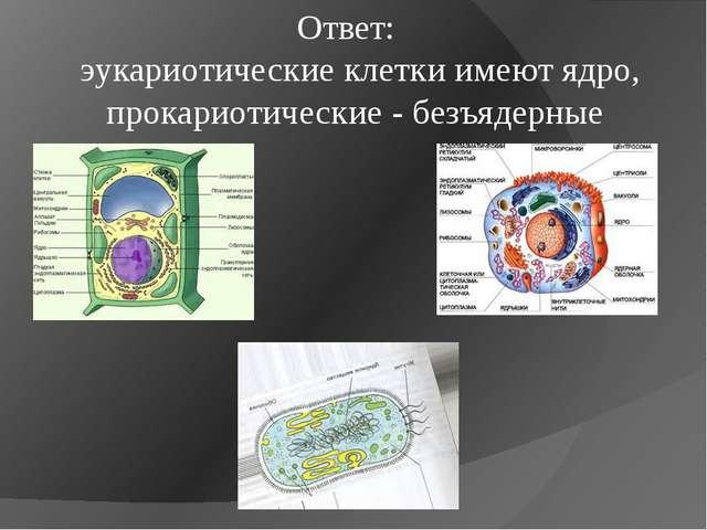 Ответ: эукариотические клетки имеют ядро, прокариотические - безъядерные