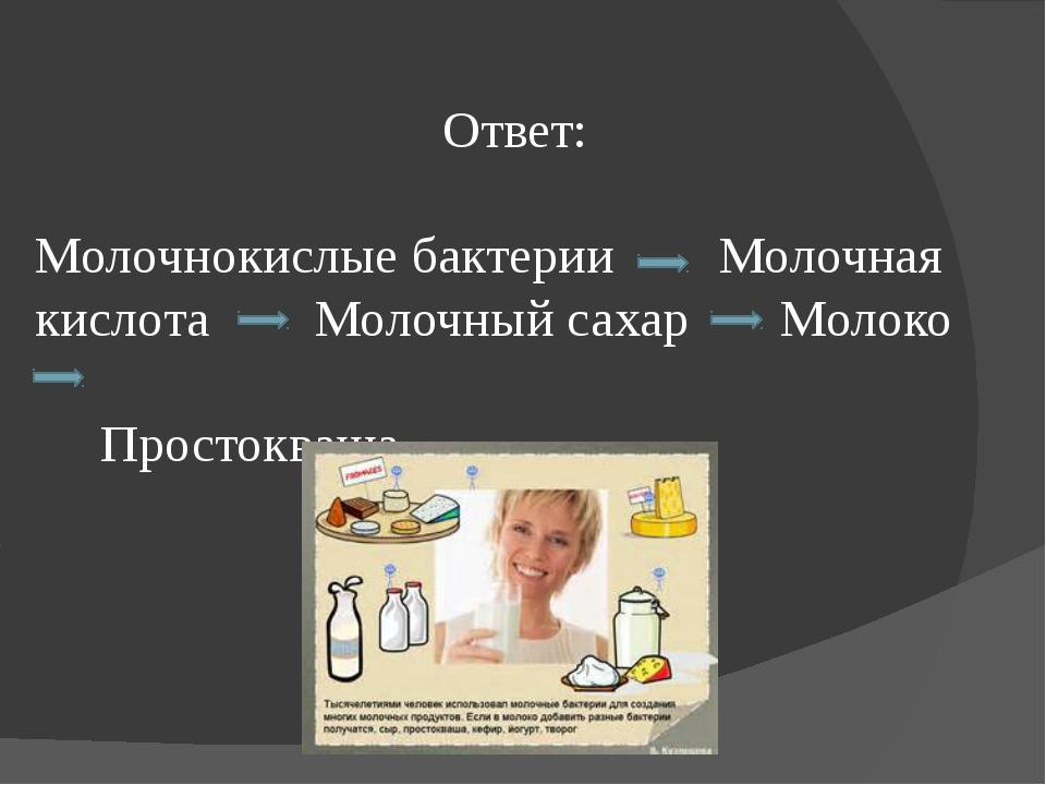 Ответ: Молочнокислые бактерии Молочная кислота Молочный сахар Молоко Простокв...