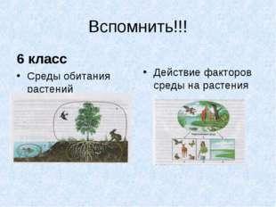Вспомнить!!! 6 класс Среды обитания растений Действие факторов среды на расте