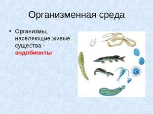 Организменная среда Организмы, населяющие живые существа - эндобионты
