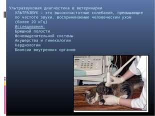 Ультразвуковая диагностика в ветеринарии УЛЬТРАЗВУК – это высокочастотные кол