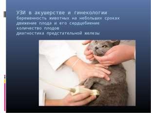 УЗИ в акушерстве и гинекологии беременность животных на небольших сроках движ