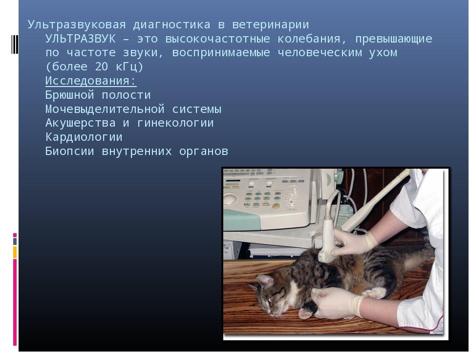 Ультразвуковая диагностика в ветеринарии УЛЬТРАЗВУК – это высокочастотные кол...