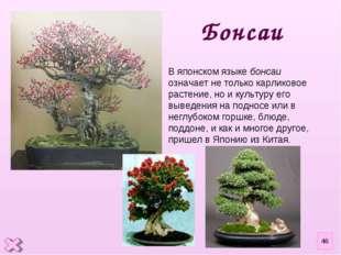 В японском языке бонсаи означает не только карликовое растение, но и культуру