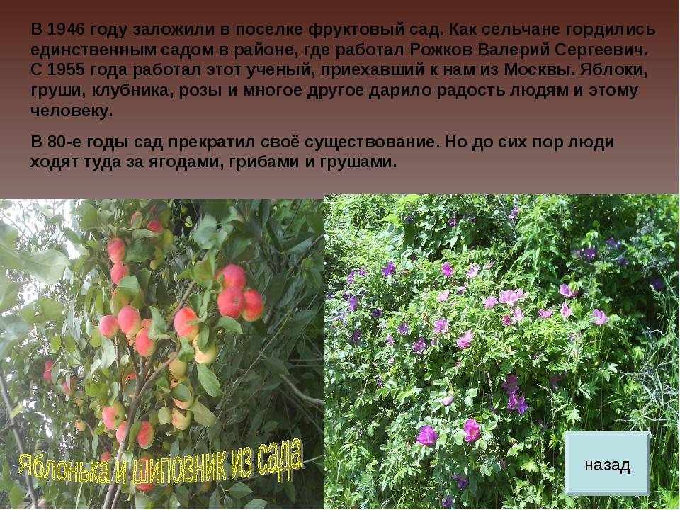 В 1946 году заложили в поселке фруктовый сад. Как сельчане гордились единстве...