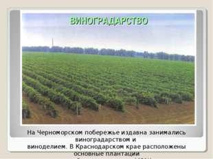 На Черноморском побережье издавна занимались виноградарством и виноделием. В
