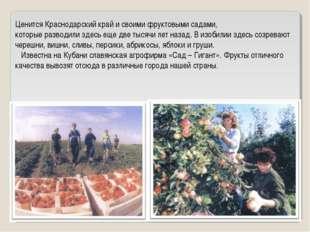 Ценится Краснодарский край и своими фруктовыми садами, которые разводили здес