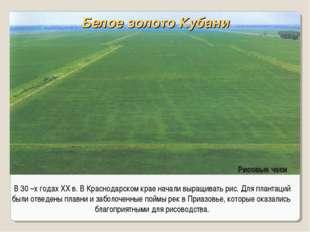 В 30 –х годах XX в. В Краснодарском крае начали выращивать рис. Для плантаций