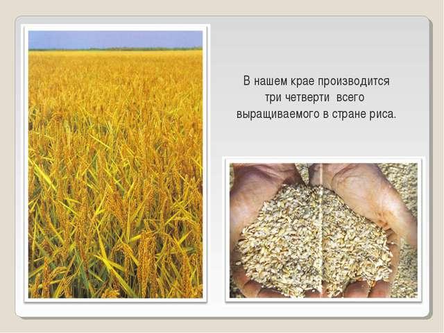 В нашем крае производится три четверти всего выращиваемого в стране риса.