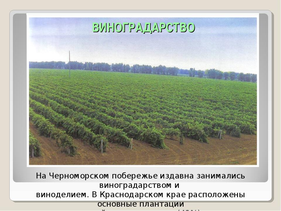 На Черноморском побережье издавна занимались виноградарством и виноделием. В...