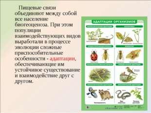Пищевые связи объединяют между собой все население биогеоценоза. При этом по