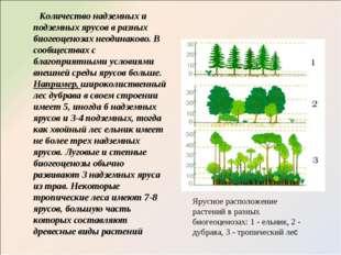 Количество надземных и подземных ярусов в разных биогеоценозах неодинаково.