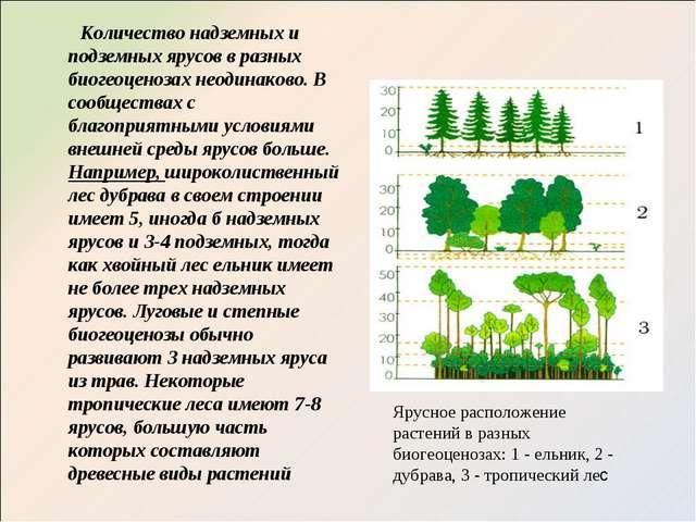 Количество надземных и подземных ярусов в разных биогеоценозах неодинаково....