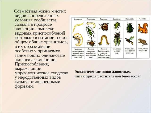 Совместная жизнь многих видов в определенных условиях сообщества создала в п...