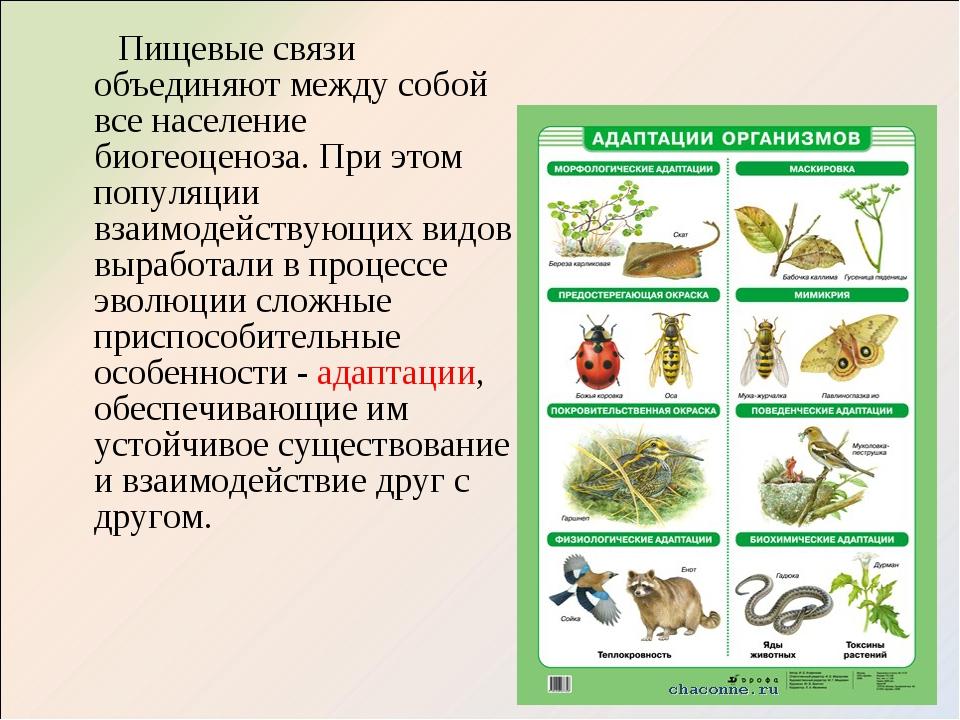 Биоценоз - это исторически сложившаяся совокупность животных , растений , грибов , и микроорганизмов