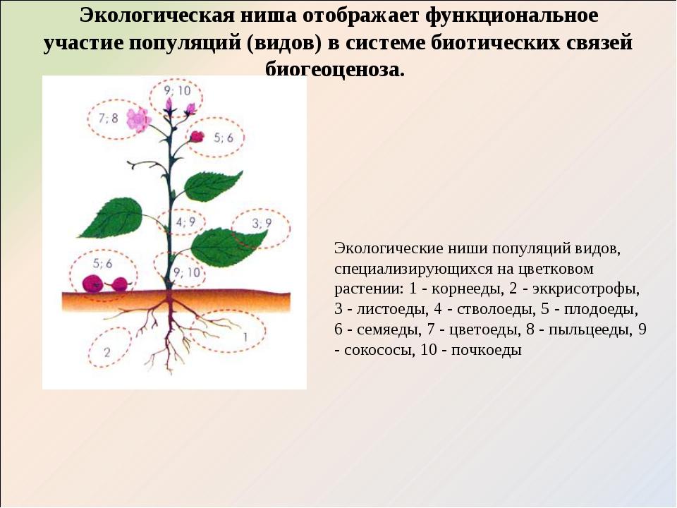 Экологическая ниша отображает функциональное участие популяций (видов) в сист...