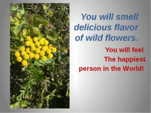 You will smell delicious flavor of wild flowers. You will feel The happiest .